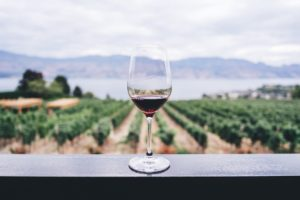 Beginner's Guide to Red Wine